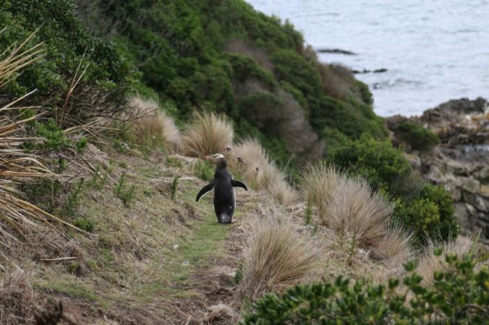 Oamaru to Dunedin